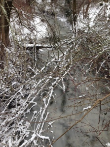 Frozen Fanno Creek at OES